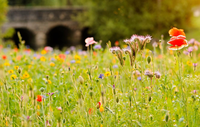 Photo wallpaper field, grass, flowers, bridge, river, Mac, meadow