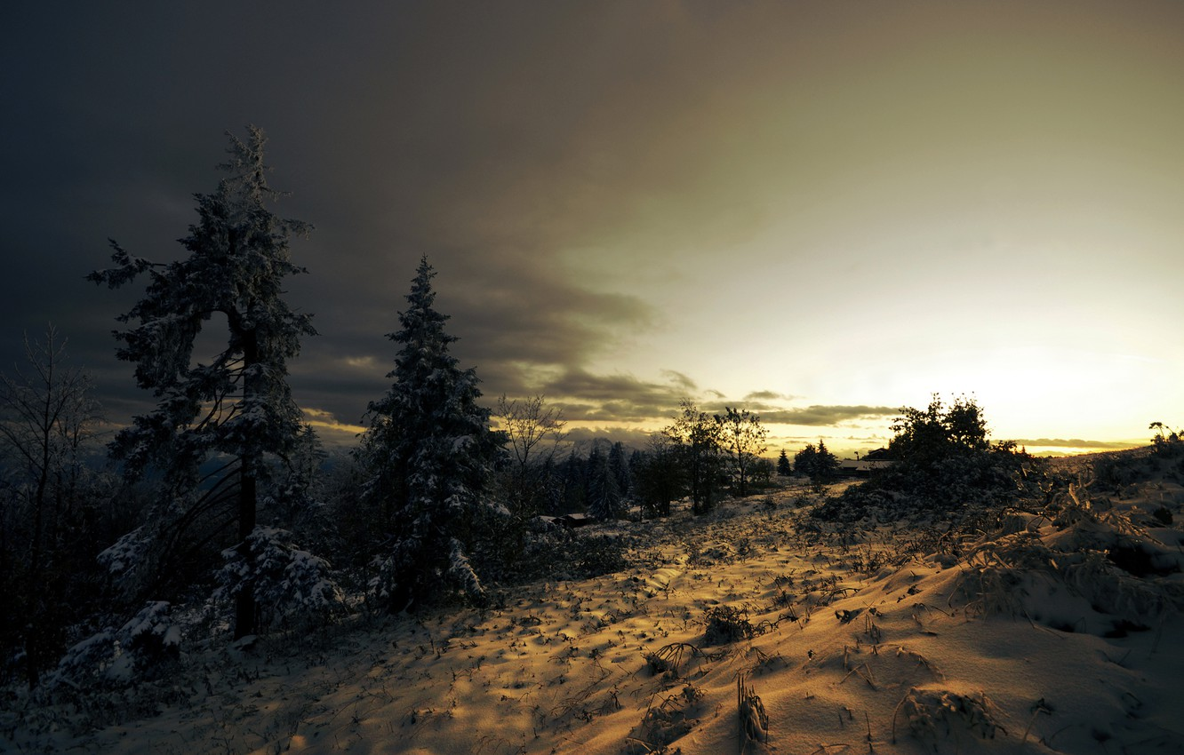 Photo wallpaper winter, snow, trees, sunset, clouds, spruce, coniferous