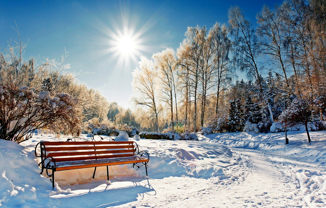 Photo wallpaper winter, forest, the sky, the sun, snow, landscape, bench, nature, Park, white, forest, sky, landscape, …