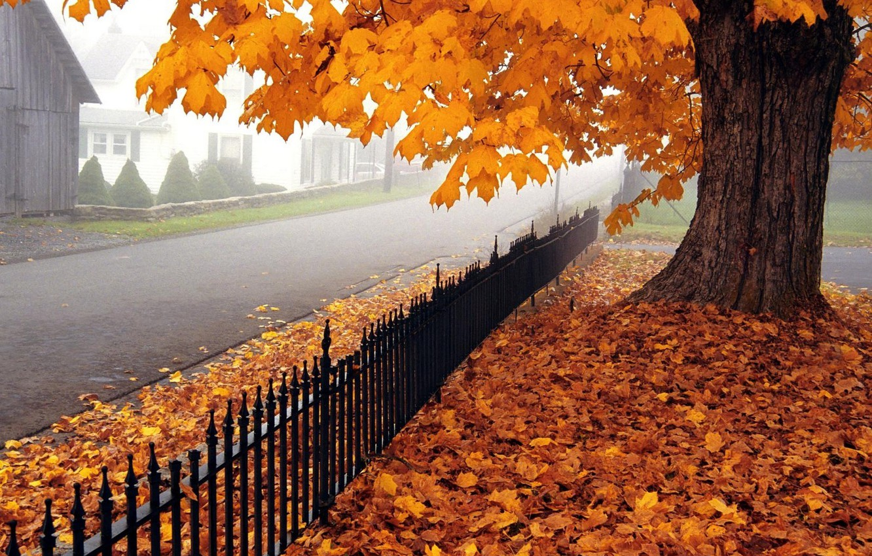 Photo wallpaper road, autumn, leaves, tree, maple