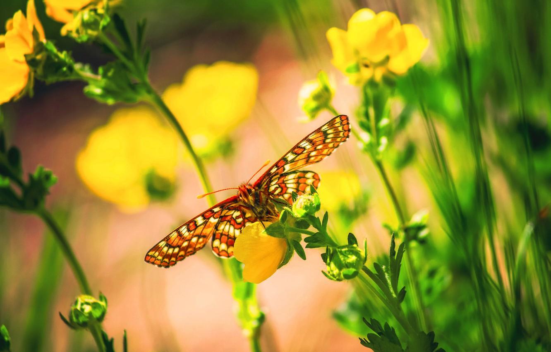 Photo wallpaper macro, flowers, butterfly, bokeh
