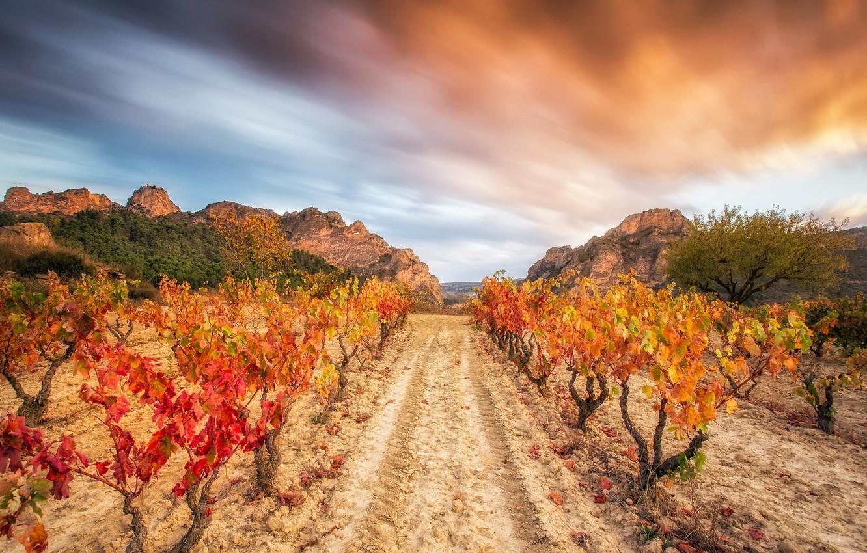 Photo wallpaper the sky, nature, vineyard
