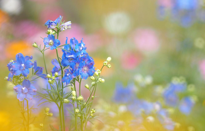 Photo wallpaper field, grass, flowers, plant, meadow, inflorescence