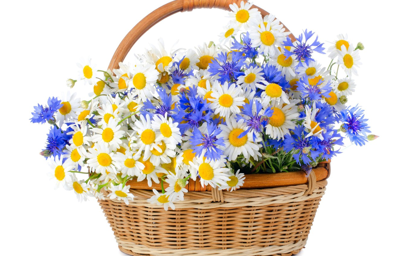 Photo wallpaper basket, chamomile, cornflowers, wildflowers, white background