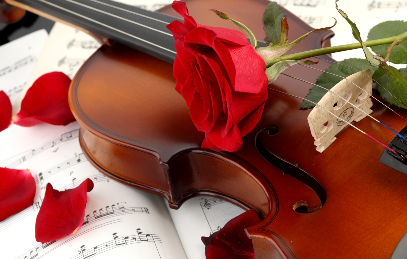 Photo wallpaper flower, notes, violin, rose, petals, red