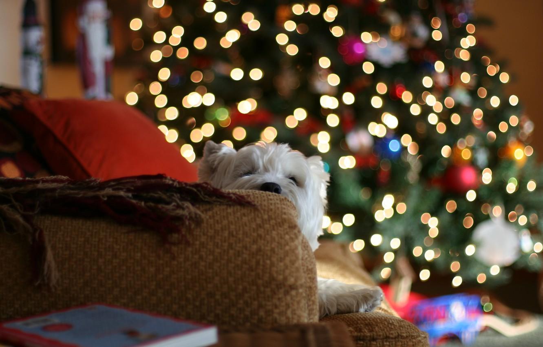 Photo wallpaper lights, house, sofa, mood, tree, dog, pillow, blankets