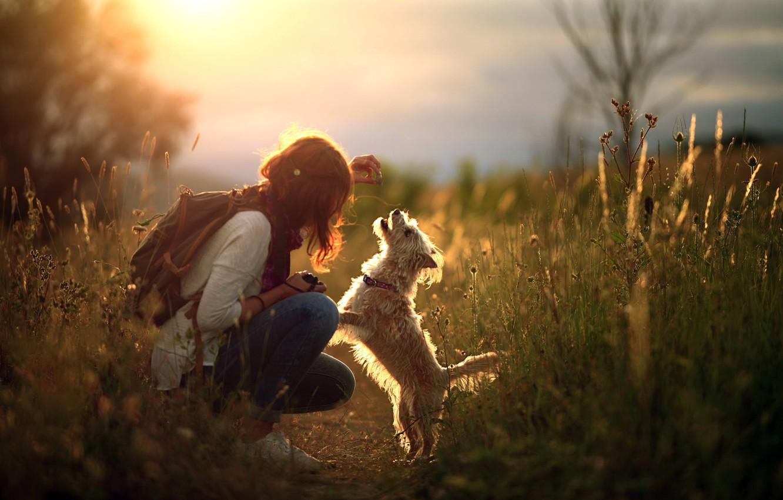 Photo wallpaper girl, light, dog