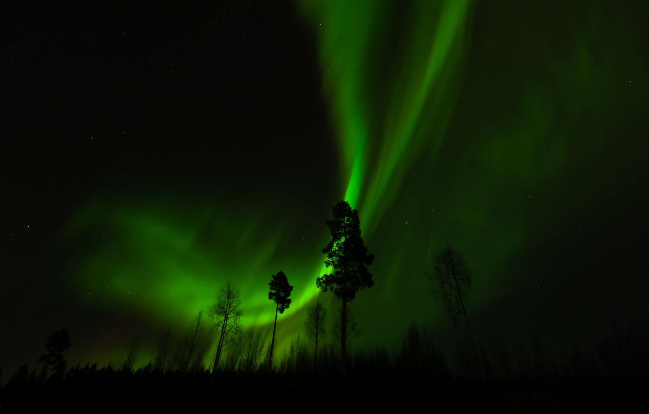 Photo wallpaper forest, trees, night, Northern lights