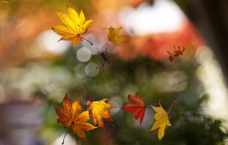 Photo wallpaper autumn, macro, foliage, web, spider, bokeh