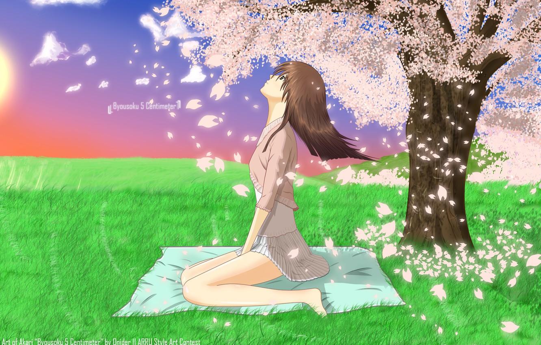 Photo wallpaper girl, anime, art, sakura, 5 Centimeters per Second