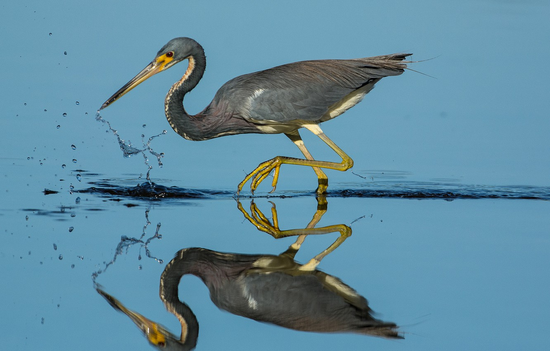 Photo wallpaper water, reflection, bird, beak