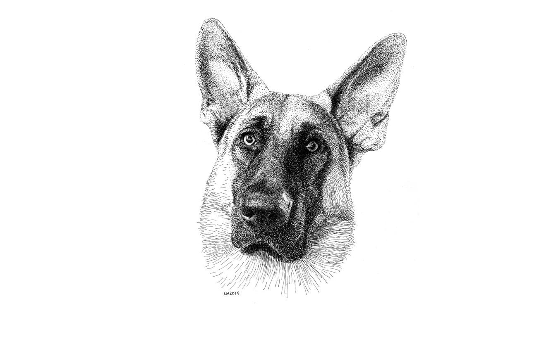 Photo wallpaper eyes, look, each, dog