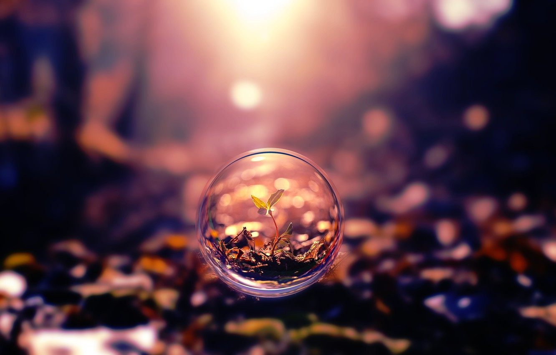 Photo wallpaper leaves, nature, Rostock, ball, blur