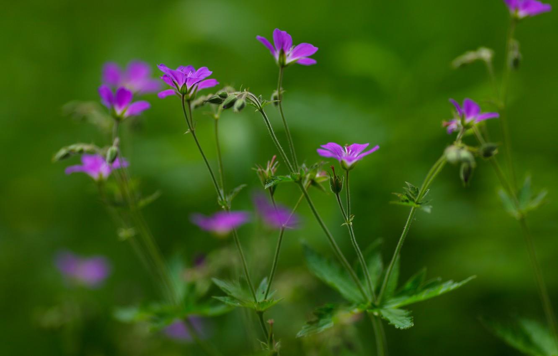 Photo wallpaper summer, green background, purple flowers