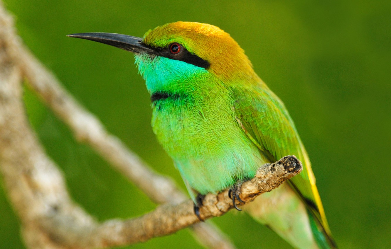 Photo wallpaper animals, leaves, macro, nature, bird, branch, animals, tail