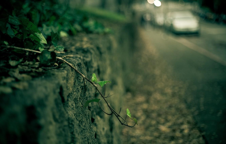 Photo wallpaper machine, leaves, macro, green, background, Wallpaper, plant, blur, branch, leaf, wallpaper, car, widescreen, background, macro, …