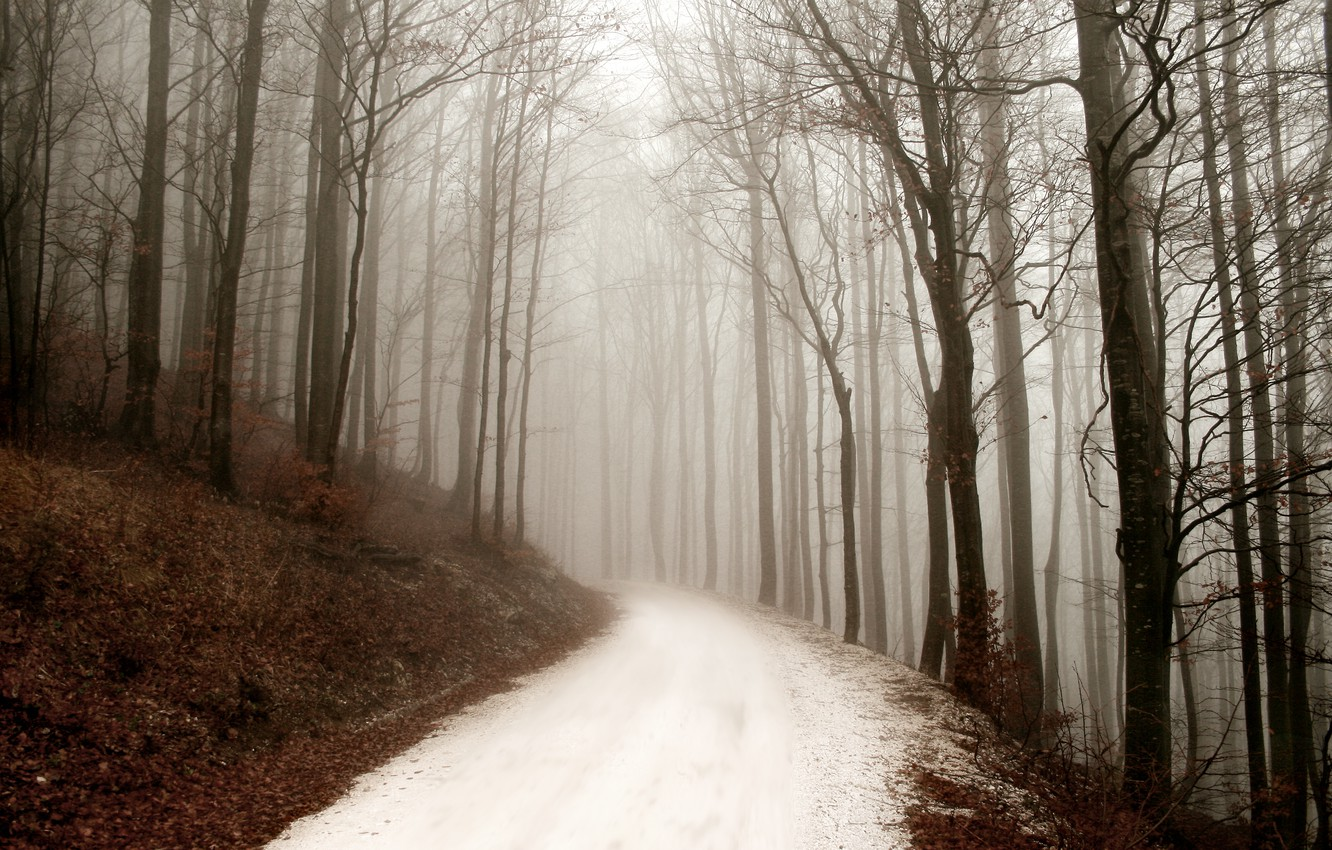 Photo wallpaper road, forest, nature, fog, forest, winter, winter day, path