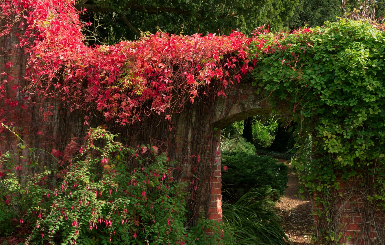 Photo wallpaper leaves, Park, wall, green, garden, arch, red, red, Plants, nature, park, green, leaves, garden