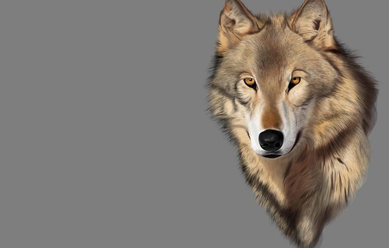 Photo wallpaper look, rendering, mood, wolf, predator, art