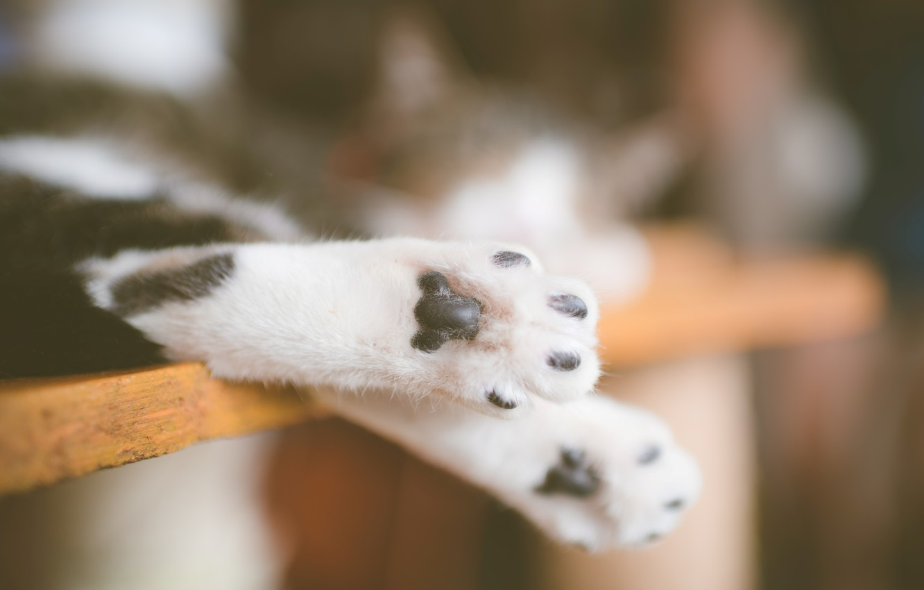 Photo wallpaper cat, legs, paws, cat