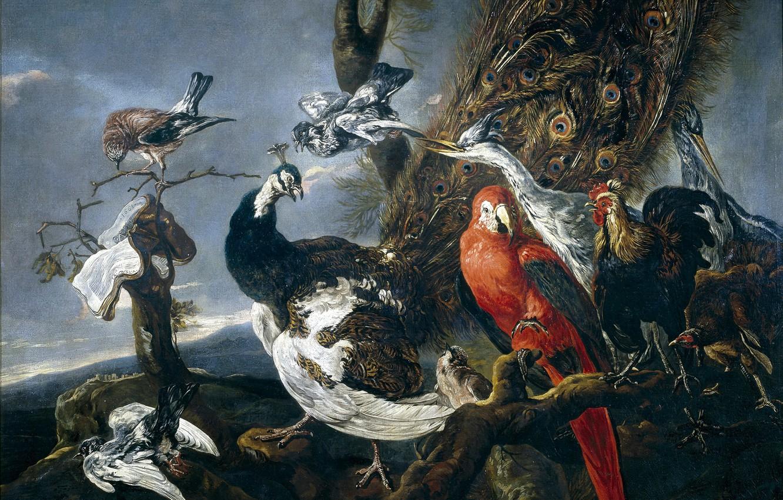Photo wallpaper picture, parrot, peacock, cock, Ian Faith, Bird Concert