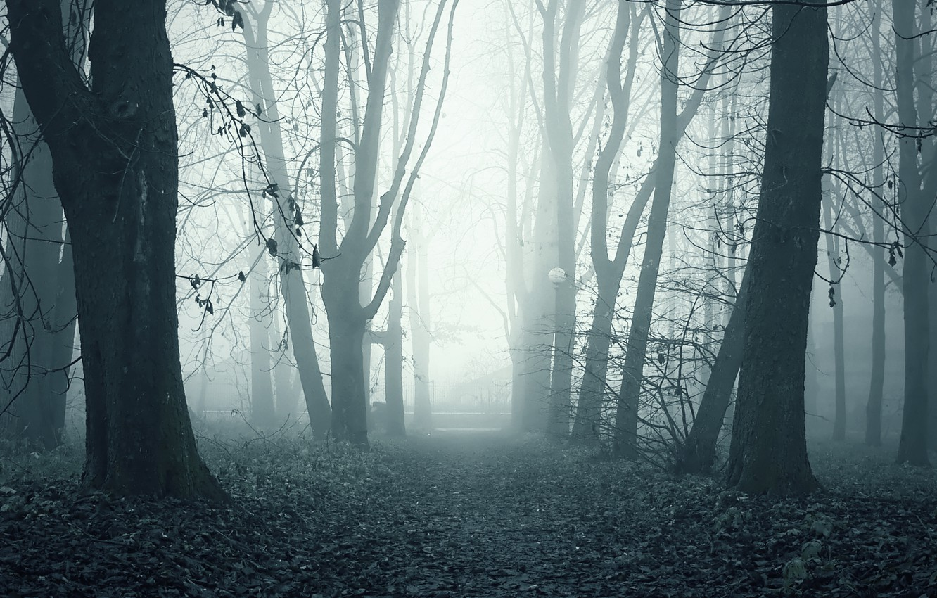 Photo wallpaper fog, Park, morning, alley, ghostly path