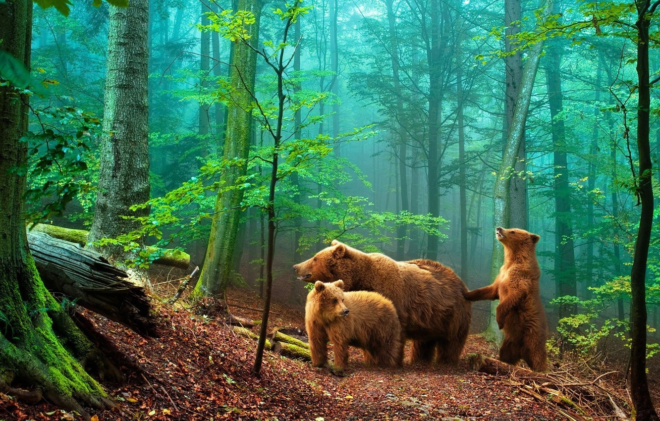 Photo wallpaper forest, bears, bears in the woods