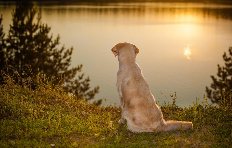 Photo wallpaper water, mood, dog
