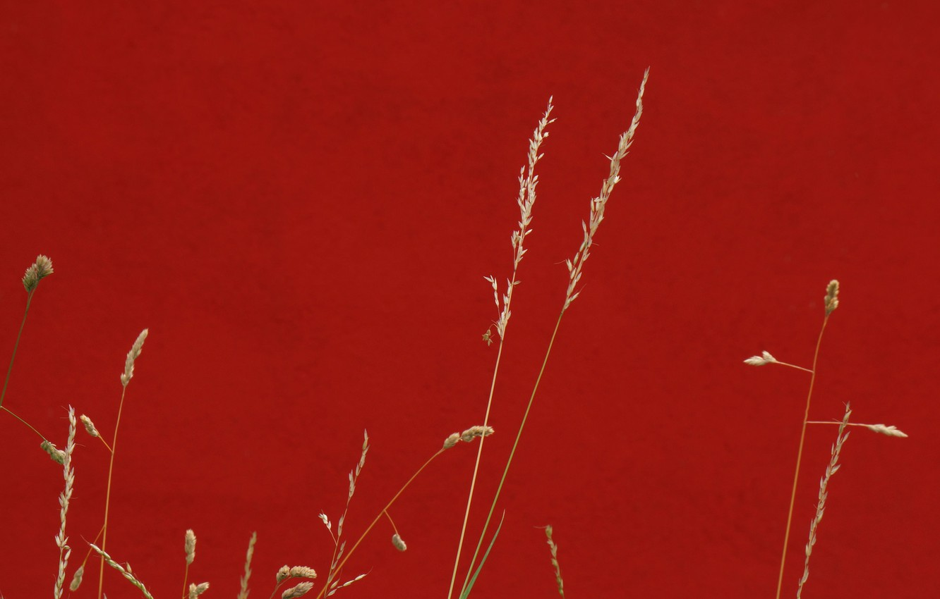Photo wallpaper grass, background, color