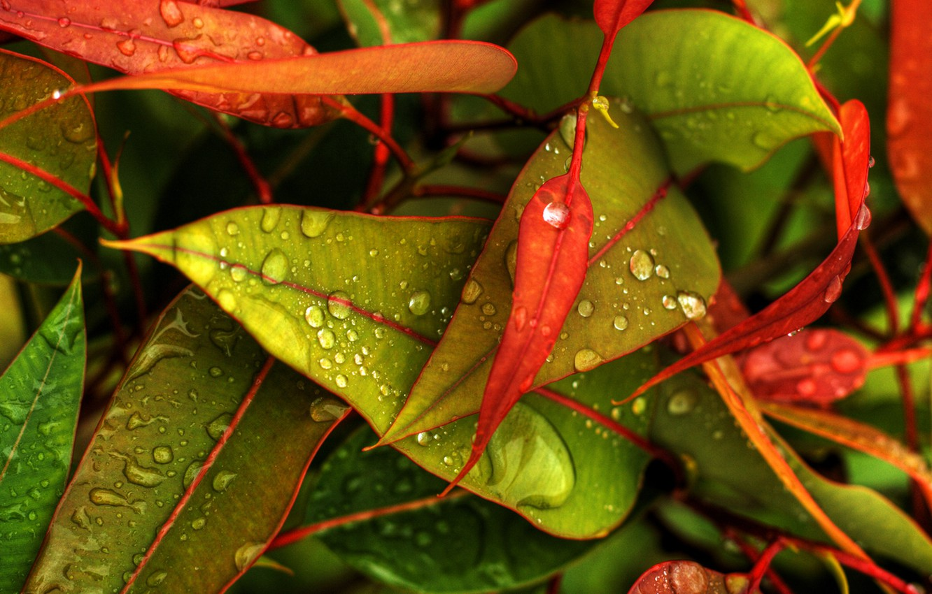 Photo wallpaper autumn, droplets, leaves