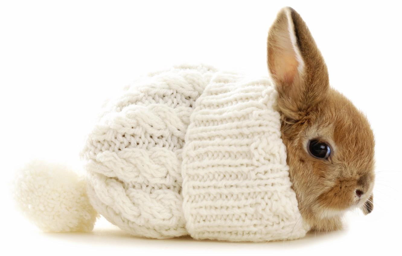 Photo wallpaper winter, hat, rabbit