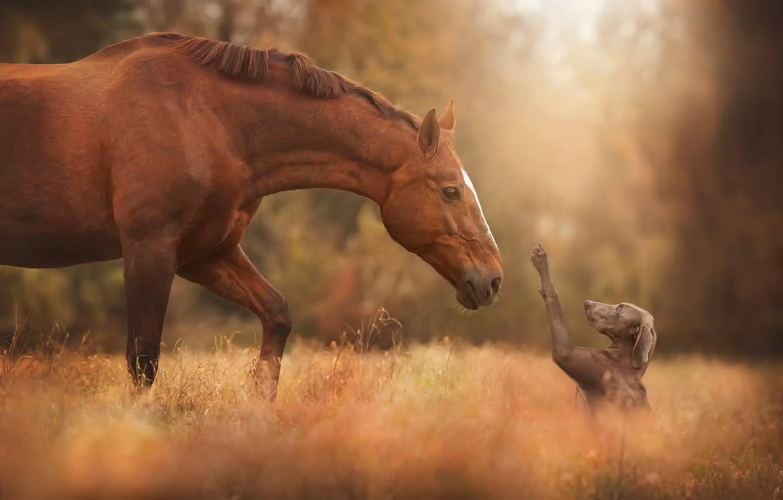 Photo wallpaper horse, meeting, dog, friends