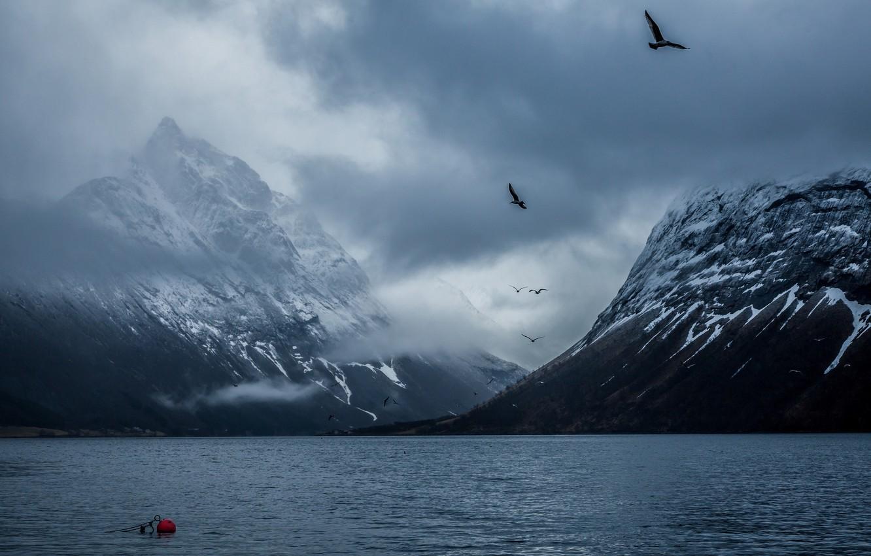 Photo wallpaper mountains, birds, Norway, Bay, Bakin