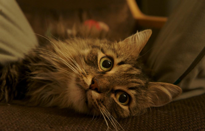 Photo wallpaper cat, green, brown