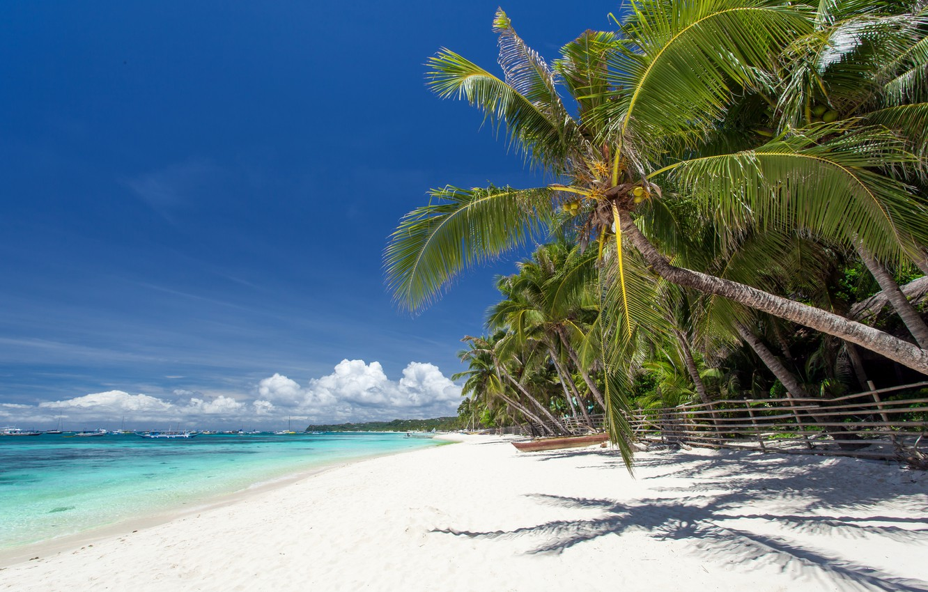 Photo wallpaper sand, sea, beach, palm trees, shore, summer, beach, sea, sand, shore, paradise, palms, tropical