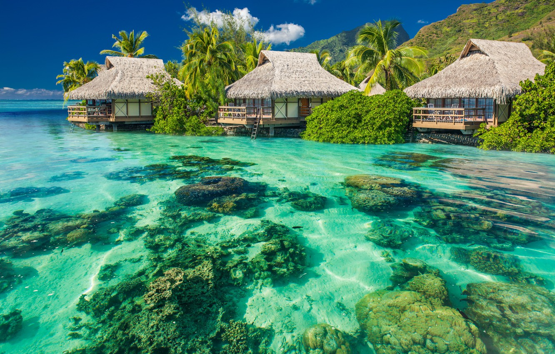 Photo wallpaper sea, beach, tropics, palm trees, houses, summer, sunshine, beach, sea, ocean, paradise, vacation, palms, tropical, …