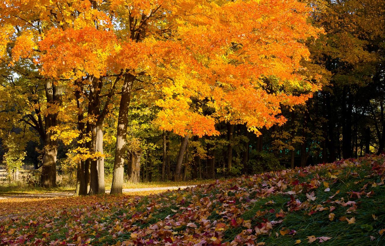 Photo wallpaper trees, foliage, autumn colors, autumn ahead, cover