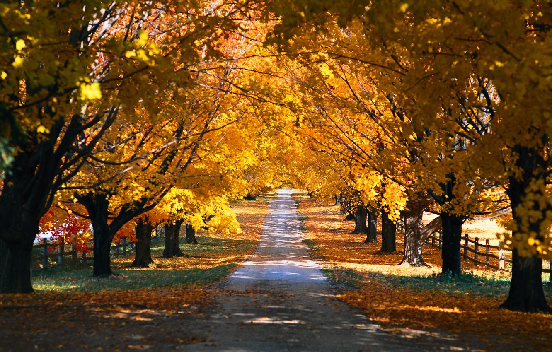 Photo wallpaper autumn, trees, nature, Park, seasons