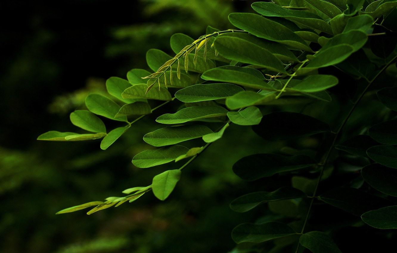 Photo wallpaper greens, leaves, branch, macro.