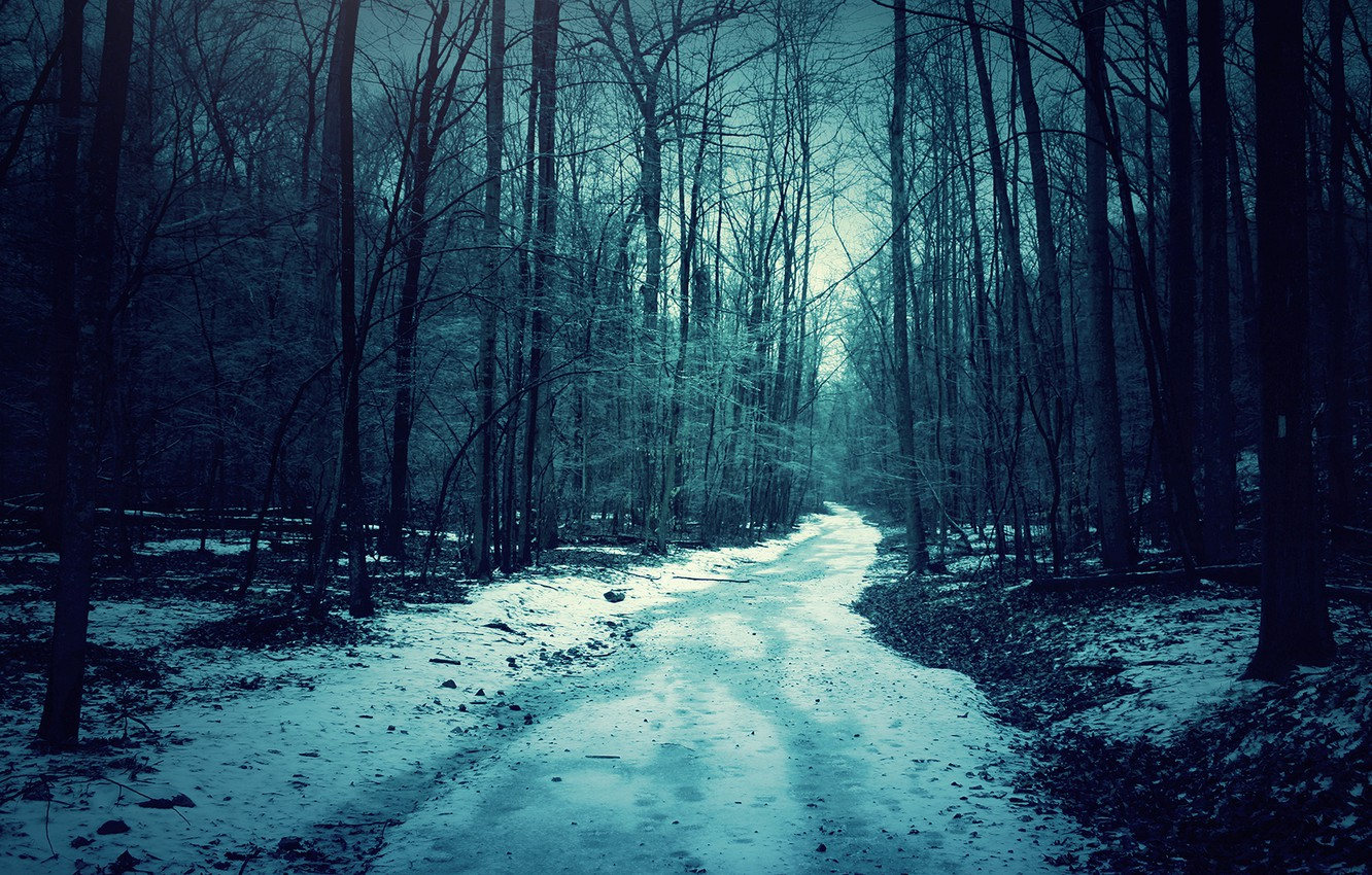Wallpaper Forest Snow Night Images For Desktop Section