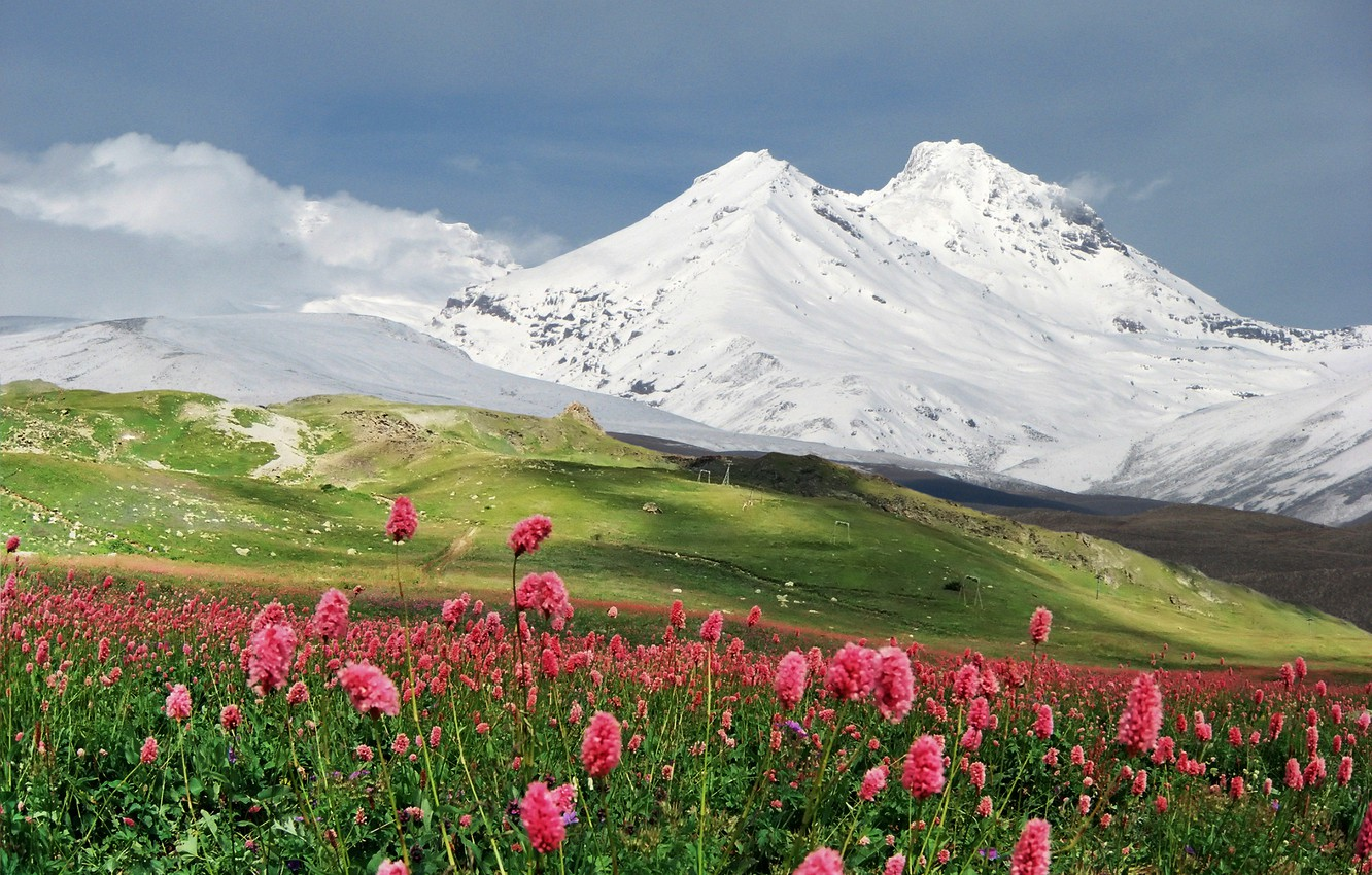 Photo wallpaper snow, flowers, mountains, meadow