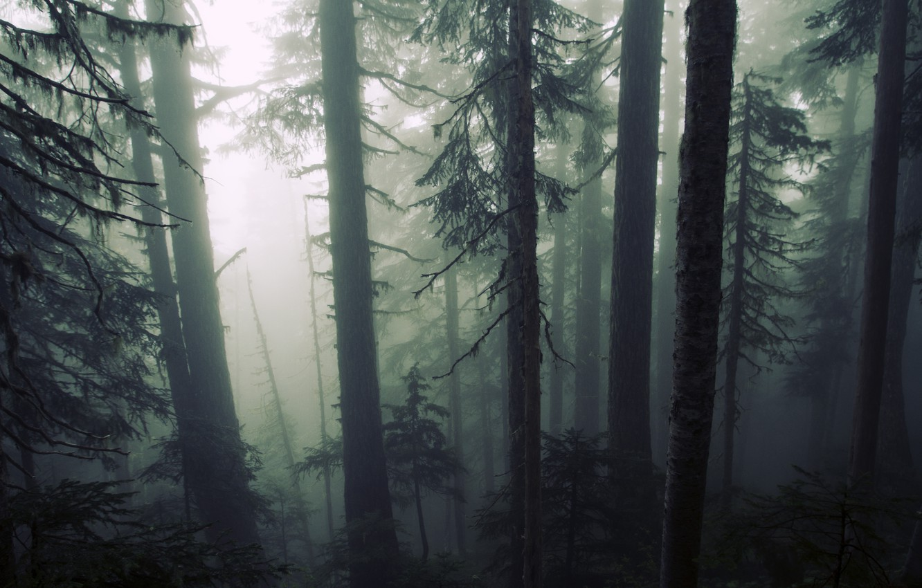 Photo wallpaper forest, trees, nature, fog, gloomy