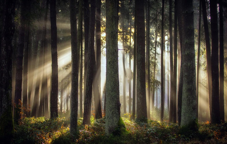 Photo wallpaper autumn, forest, light