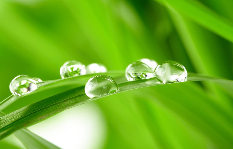 Photo wallpaper GRASS, ROSA, WATER, SPHERE, DROPS, GREEN, GREEN, A BLADE of grass