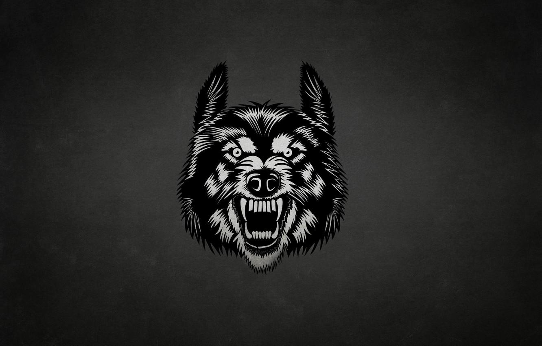 Photo wallpaper face, the dark background, wolf, wolf