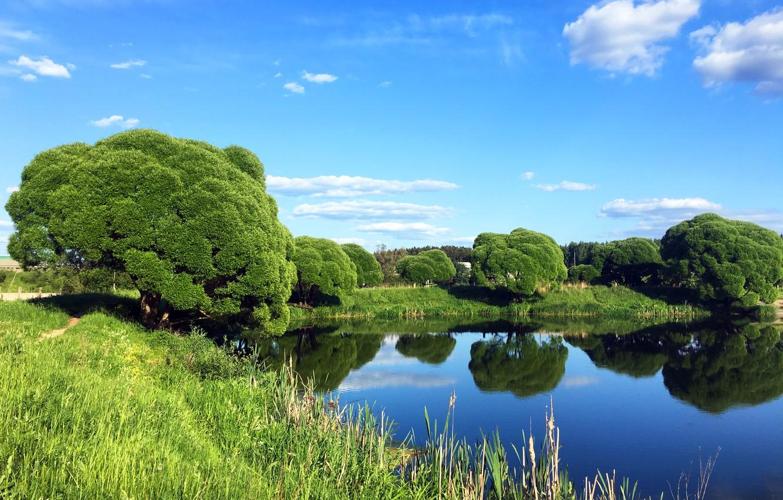 Photo wallpaper summer, trees, nature, lake
