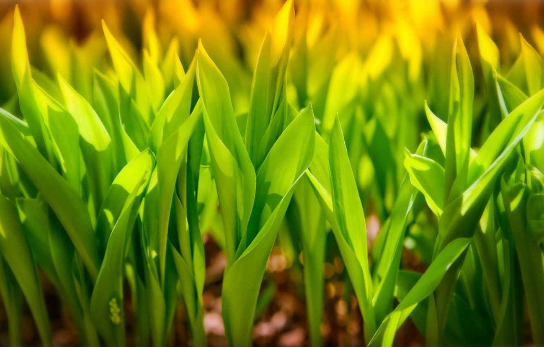 Photo wallpaper greens, leaves, macro, tube