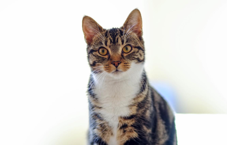 Photo wallpaper cat, cat, looks, colorful