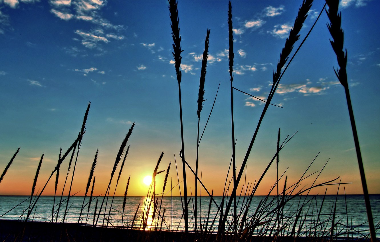 Photo wallpaper sea, the sky, the sun, clouds, macro, sunset, river, plant
