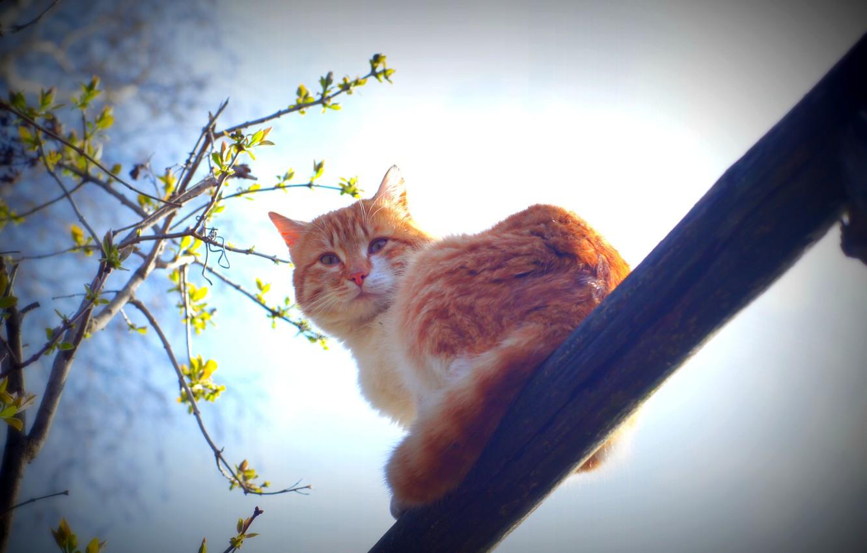 Photo wallpaper cat, mustache, the sun, spring, morning, animals nature
